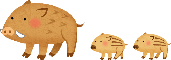 boar-mom-baby